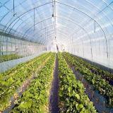 Poly Tunnel voor de Tropische Groene Tunnel van het Huis Starwberries met de Directe Verkoop van de Fabriek
