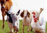 Medicina veterinária Salinomycin para os animais (12%)