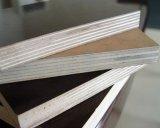 A película enfrentou a madeira compensada para a construção
