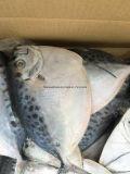 Heißer Verkaufs-Meerestier-Moonfish gefrorener Preis