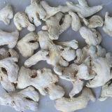 Origem seca chinesa de Yunnan do gengibre