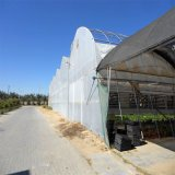 Multi-Span Agricultural Film Greenhouse para Sale
