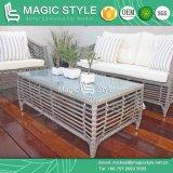 Sofà stabilito del rattan del sofà di vimini sintetico con la mobilia di svago dell'ammortizzatore con la tessitura dello Special (stile magico)