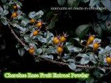 Pó do extrato da fruta de Rosa Cherokee/Fructus Rosae Laevigatae