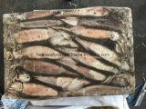 Chinesischer Kalmar Argentinien-Illex für Thunfisch-Köder