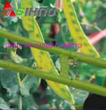 Broca de semente vegetal inteiramente automática