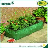 Planteur populaire de jardin d'Onlylife avec la couverture