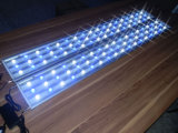 indicatore luminoso di 150cm 162W White+Blue LED per l'acquario