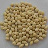 La collecte neuve chinoise a blanchi le grain d'arachide, l'arachide enlevée, grain d'arachide sans peau rouge
