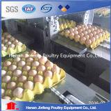 Gaiolas de aço em forma de u da camada da galinha da melhor venda