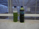 Séparateur biphasé de centrifugeuse de disque de débit automatique pour des algues