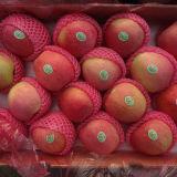 Regelmäßiger Lieferant von frischem rotem Qinguan Apple