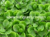 Трава стены Decrative искусственная для крытого и напольного украшения (SUNW-MZ00043)