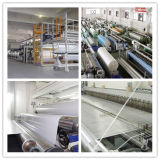 PVC Coated Tarpaulin para Tensile Construction Membrane