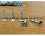 Parafuso do Drywall feito em China