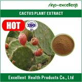 Poudre normale d'extrait de cactus de Hoodia