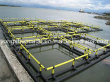 HDPE深海の正方形釣ケージ