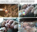 Ajustador do intestino de Unigrow para o pombo, porco, galinha, criação de animais do pato