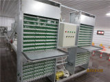 Full Set Automatic Poultry Equipments H/a Type Layer Cage Icubator를 가진 주문을 받아서 만들어진 Low Price Chicken House