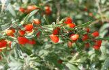 寧夏、中国からのDired Gojiの果実Origined