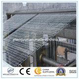 Ячеистая сеть Galvanzied высокого качества шестиугольная/шестиугольное плетение провода