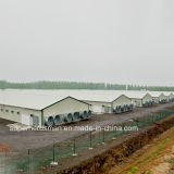 Prodution 모든 장비를 가진 가벼운 강철 구조물 가금 농장 건축
