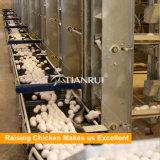 Matériel automatique de couche de volaille galvanisé par bâti de H pour des fermes de poulet