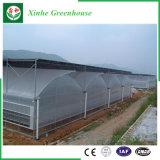Casa verde da multi película da agricultura da extensão para vegetais