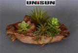 Succulent Potted de los bonsais en planta imperecedera con diversas tallas del crisol (18-HF3911)