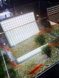 Kit bicolore dell'indicatore luminoso della stuoia di Bianco-Colore LED