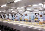 Cadena de producción automática de calidad superior del atasco de cereza