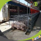 Heißer Verkaufs-Schwangerschaft-Stall/einzelner Stall geeignet für alle Schwein-Bauernhöfe