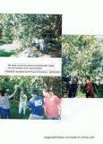 マンゴの植わることのためのUnigrowの土のコンディショナー