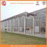 Agricoltura delle serre di vetro per gli ortaggi/fiori