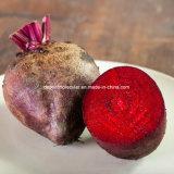 De Rode, Perfecte Kleurstof van de biet, Additief voor levensmiddelen, Drank