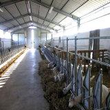 安い費用と取除かれる鉄骨構造の牛