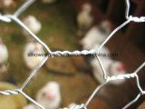 Zinco galvanizado, a quente chapeado, rede de fio sextavada revestida PVC