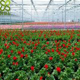 使用されるVenloの花形のマルチスパンの商業ガラス温室
