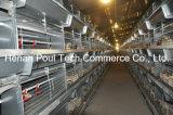 Het Automatische Systeem van uitstekende kwaliteit van de Kooi van de Kip van de Jonge kip (het type van H)