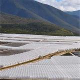 가장 싼을%s 가진 고방사능 구역을%s 중국 공장 Dricetly 특별한 높은 경간 다중 온실