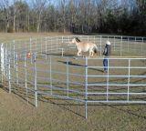 Il bestiame tuffato caldo dell'azienda agricola dell'Australia recinta il cancello