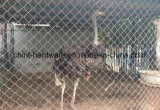 Rete fissa galvanizzata buon prezzo di collegamento Chain per gli animali