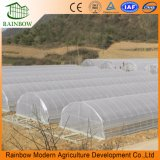 Hot Commercial Good Used Invernadero de túnel individual Multi Span Agricultal Invernadero de película plástica