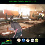 Natrure Sapele, cereja, carvalho, cinza, teca, maple, madeira compensada de faia para produtos de mobiliário
