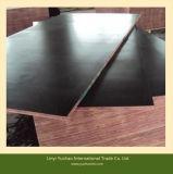 La película negra hizo frente a la madera contrachapada con el certificado del CE para Contruction