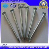 Clous de fer galvanisés Clous de toiture / Nails communs / Clous en béton
