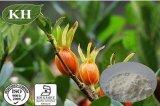 Protection du foie Extrait Gardenia Géniposide 10% ~ 98% Testé par HPLC