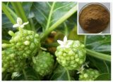 Extracto vendedor caliente fresco natural de la fruta del 100% Noni