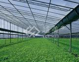 온실 폴리탄산염 구렁 장 Folha는 건축재료를 위한 Policarbonato 빈 장 (YM-PC-025)를 한다