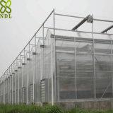 Casa verde da grande folha plástica para Growing de flor